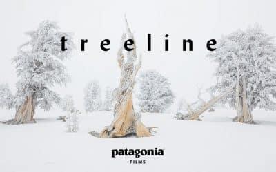 Treeline Trailer